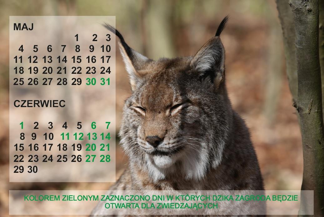 Kalendarz otwarcia